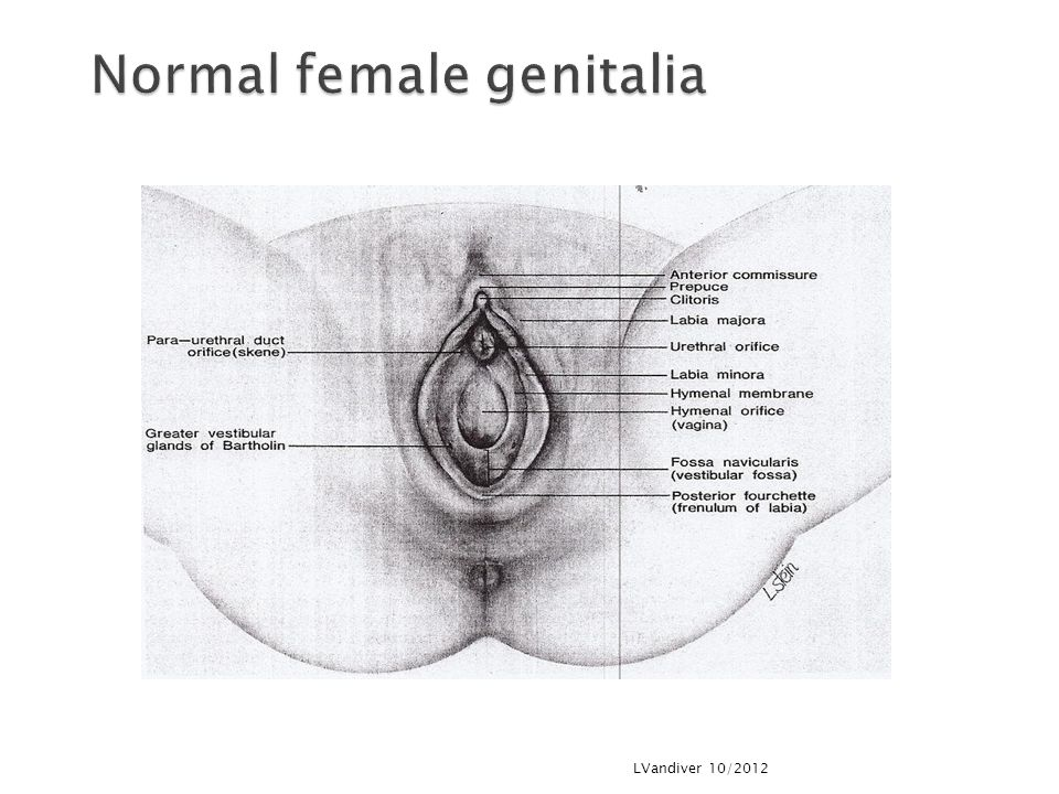 Normal female genitalia