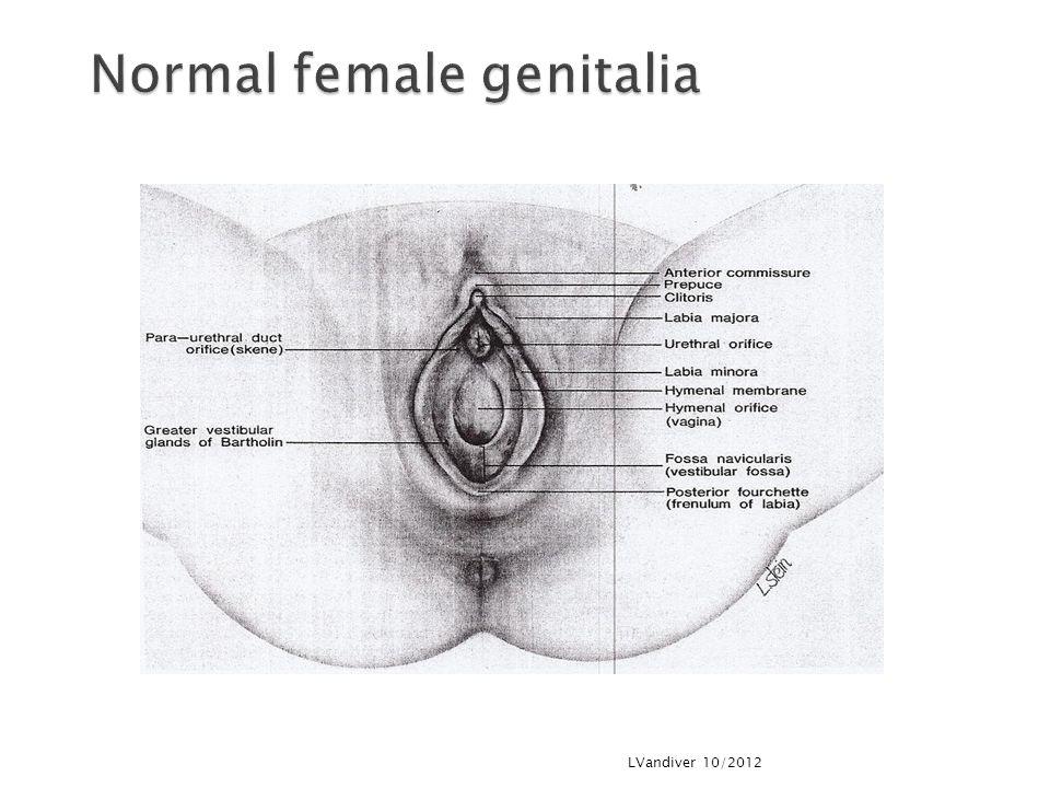 Normal female genitalia