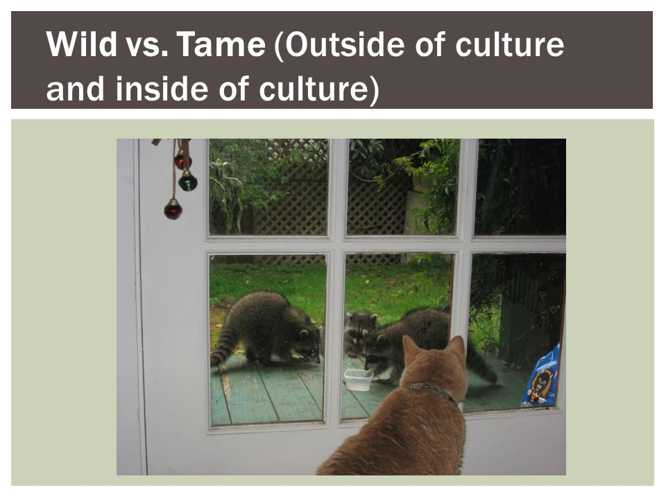 Wild vs. Tame (Outside of culture and inside of culture)