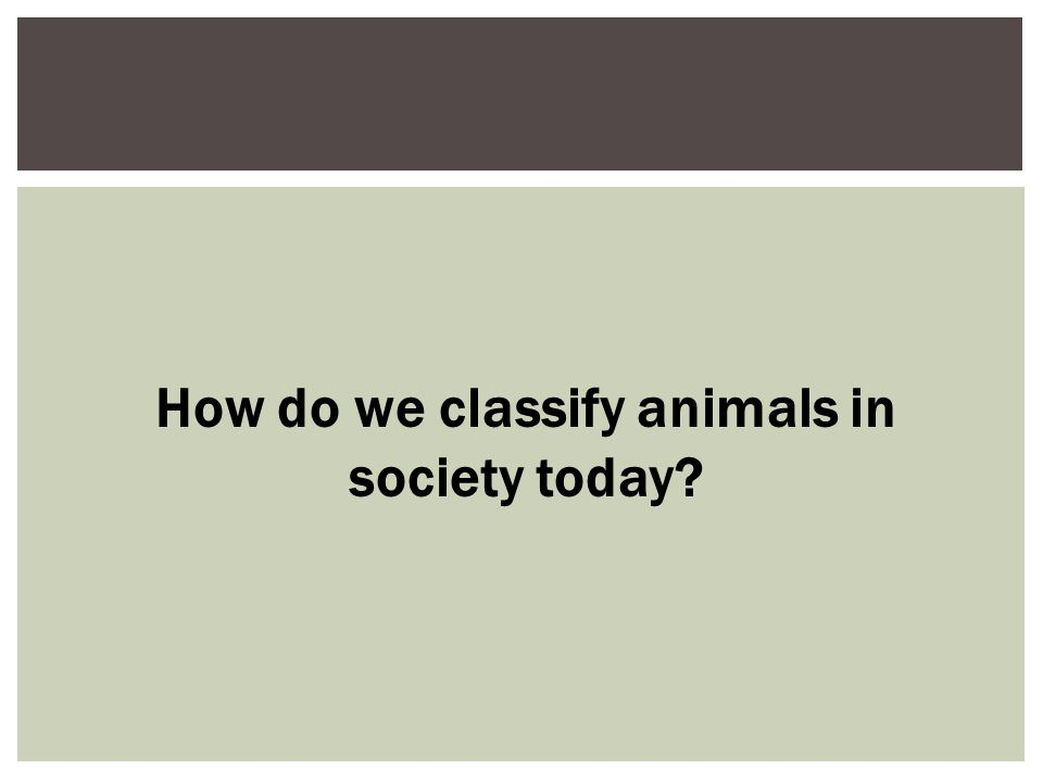 How do we classify animals in society today