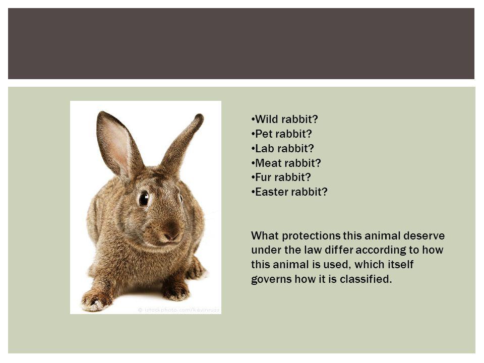 Wild rabbit Pet rabbit Lab rabbit Meat rabbit Fur rabbit