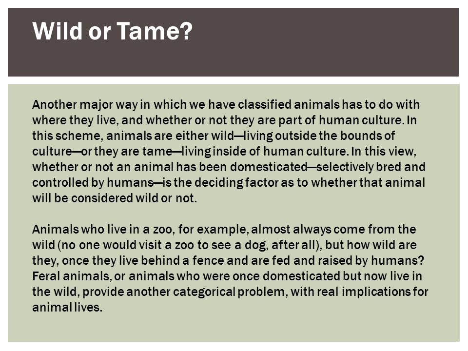 Wild or Tame