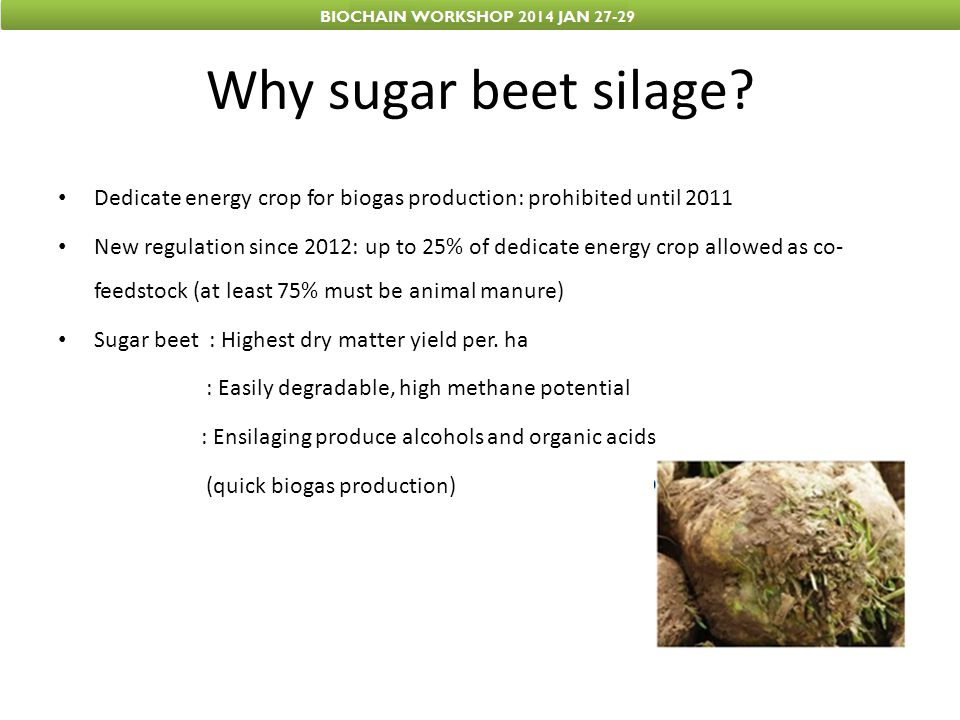 Why sugar beet silage Dedicate energy crop for biogas production: prohibited until 2011.