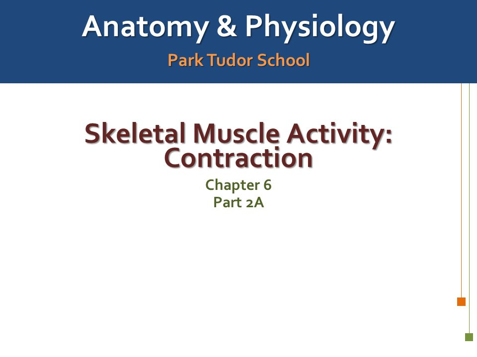 Skeletal Muscle Activity: Contraction