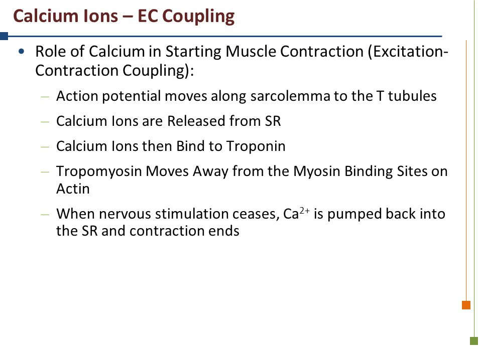 Calcium Ions – EC Coupling