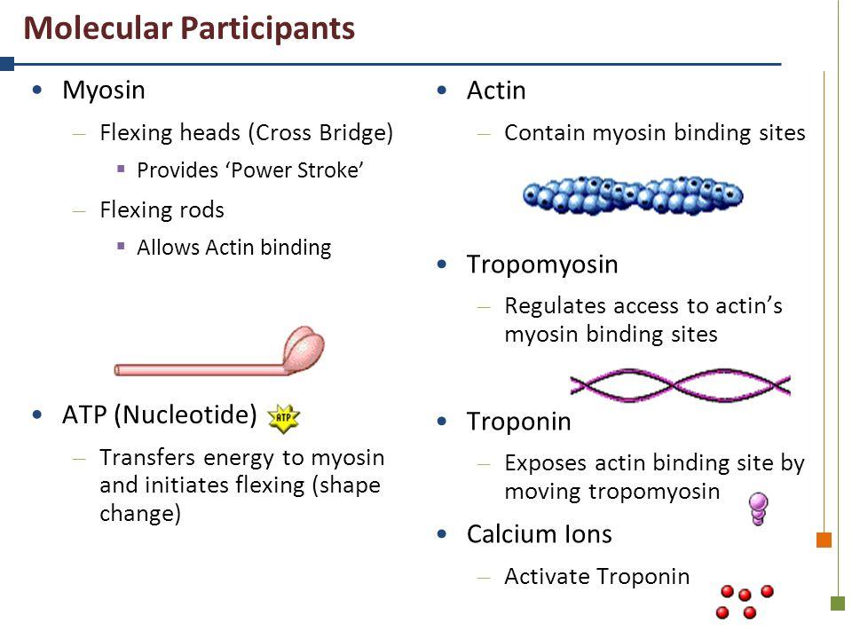 Molecular Participants