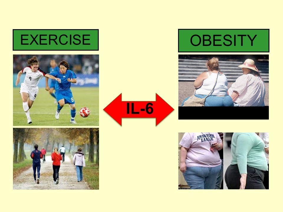 EXERCISE OBESITY IL-6 23