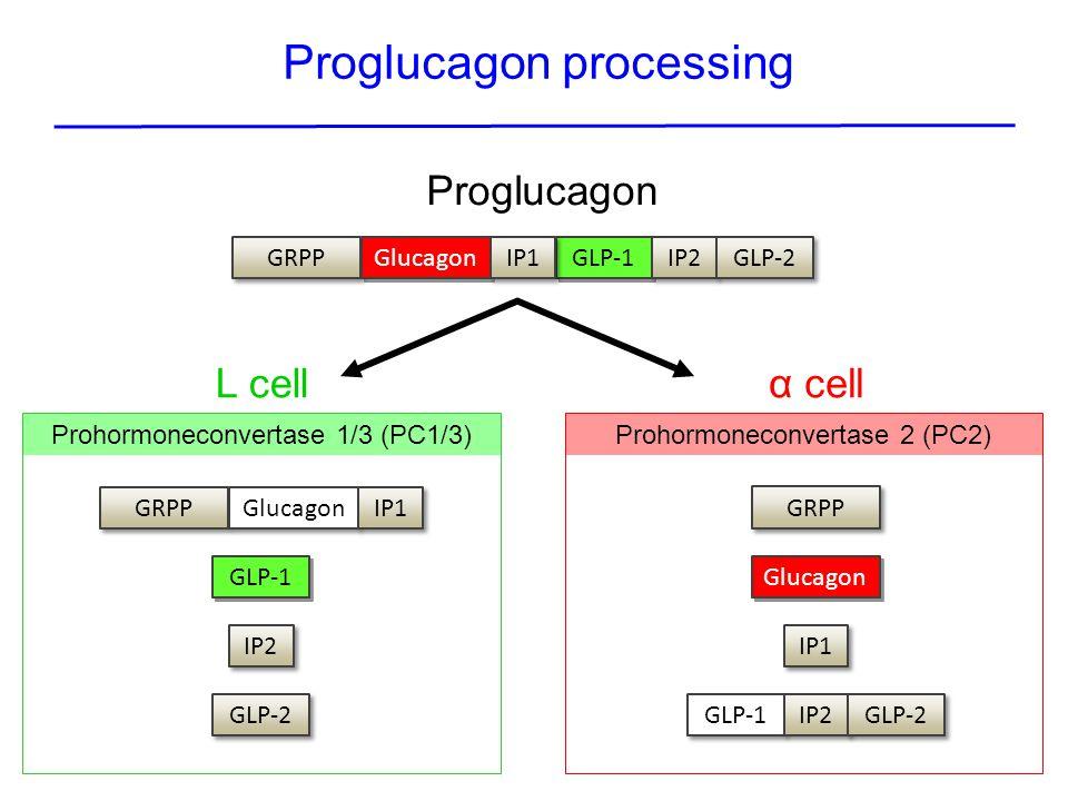 Proglucagon processing
