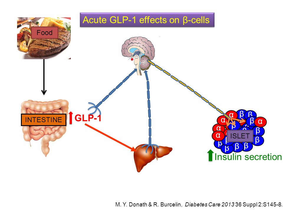 Acute GLP-1 effects on β-cells