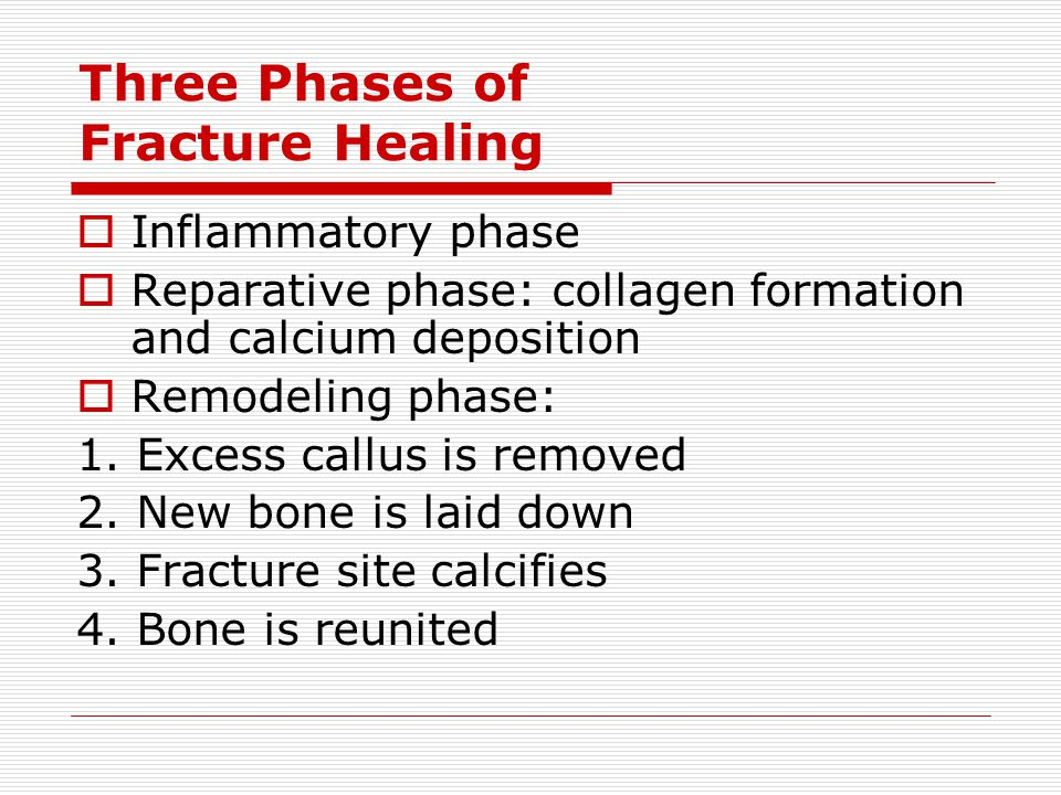 Three Phases of Fracture Healing