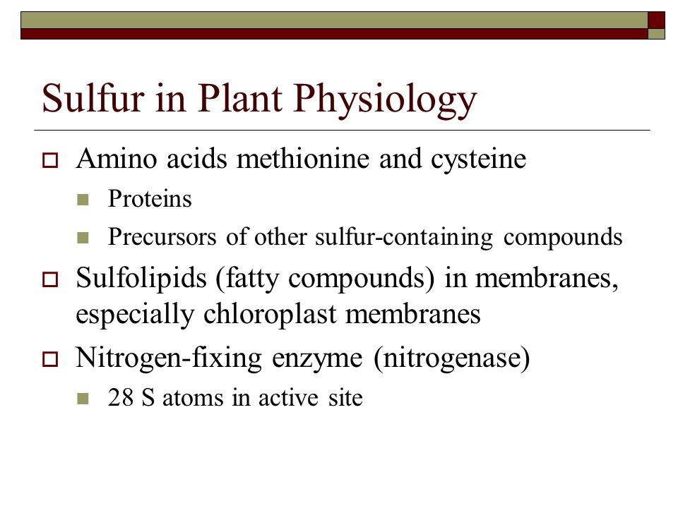 Sulfur in Plant Physiology