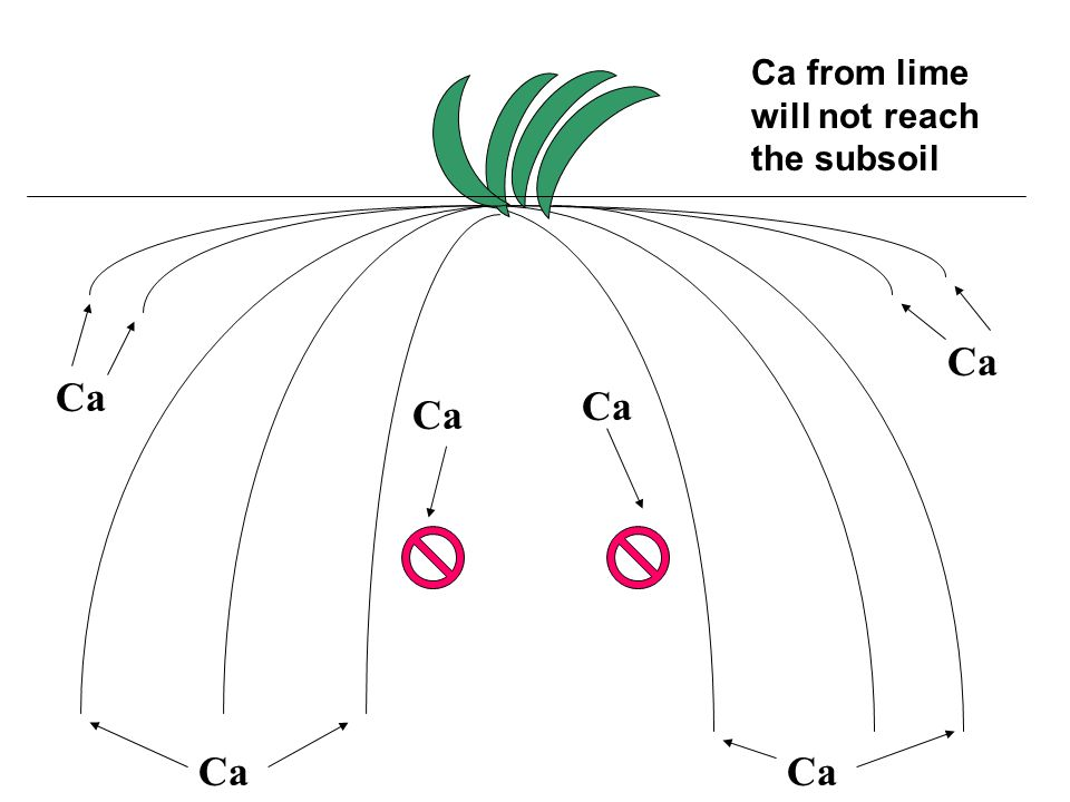 Ca from lime will not reach the subsoil