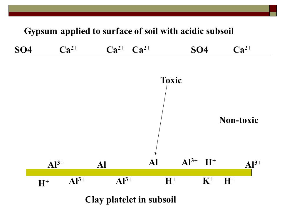 Gypsum applied to surface of soil with acidic subsoil