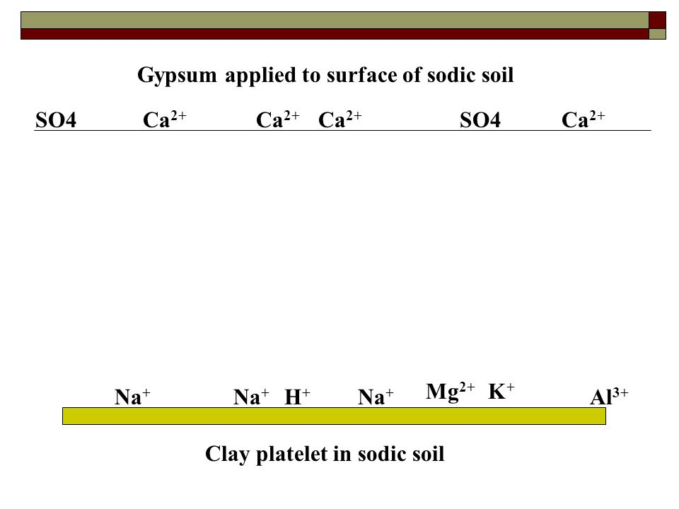 Gypsum applied to surface of sodic soil