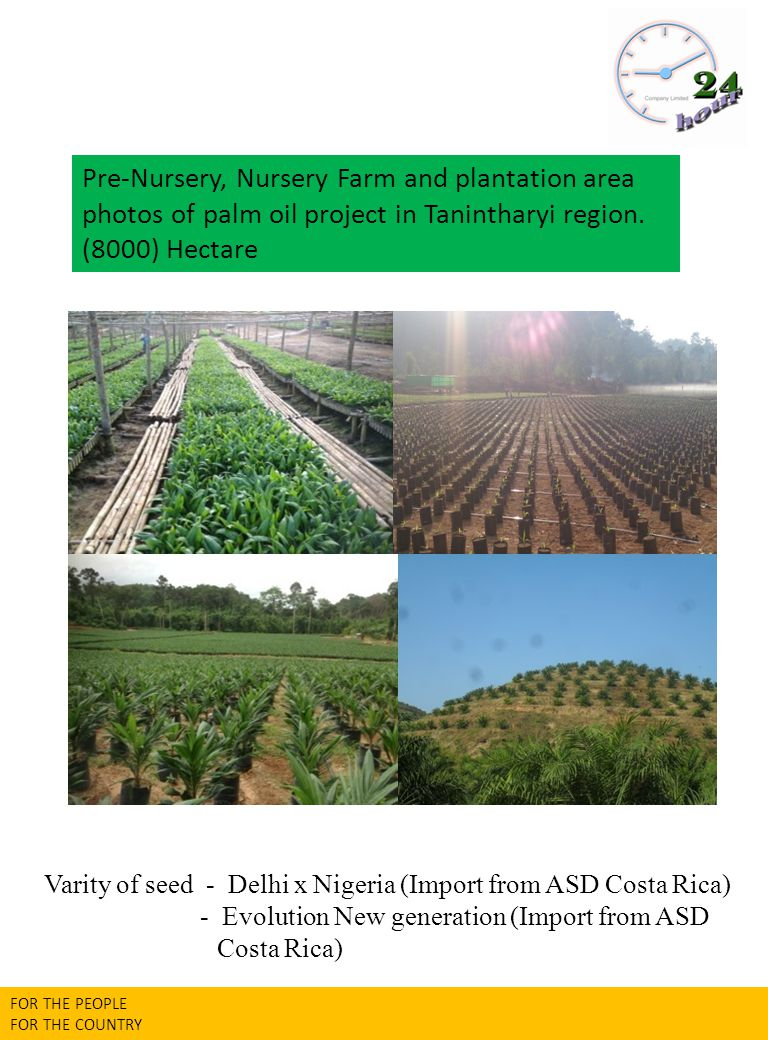 Varity of seed - Delhi x Nigeria (Import from ASD Costa Rica)