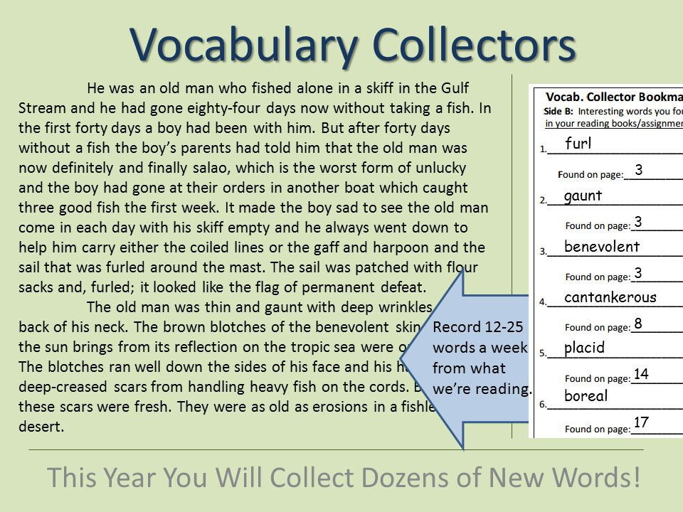 Vocabulary Collectors