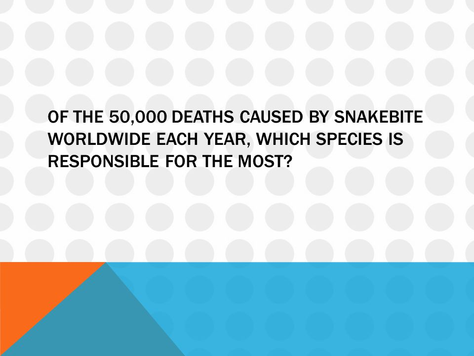 Of the 50,000 deaths caused by snakebite worldwide each year, which species is responsible for the most