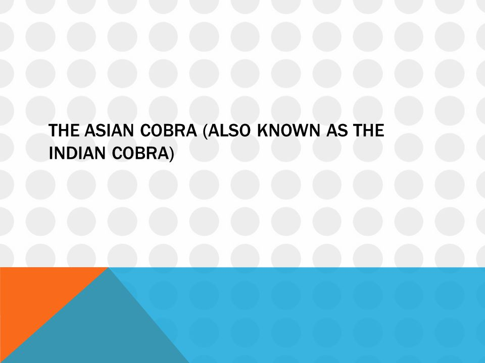 The asian cobra (also known as the indian cobra)