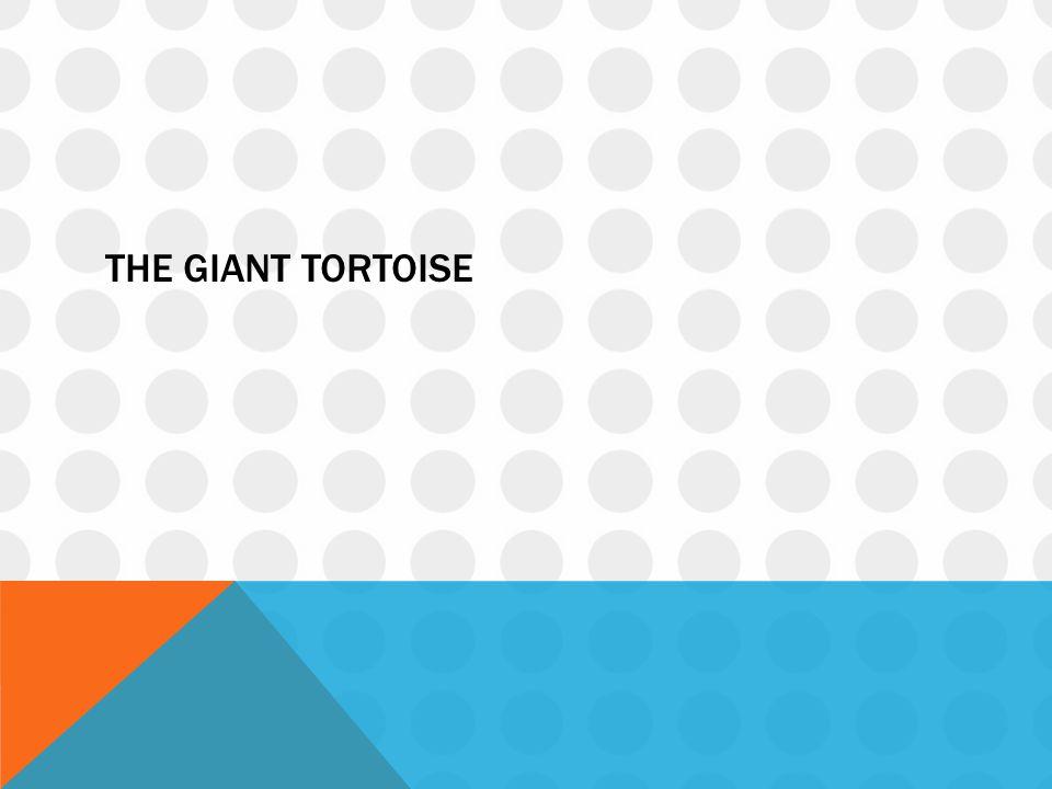 The giant tortoise