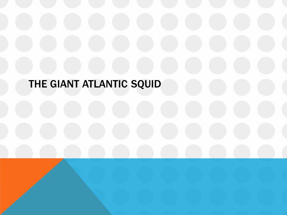 The giant Atlantic squid