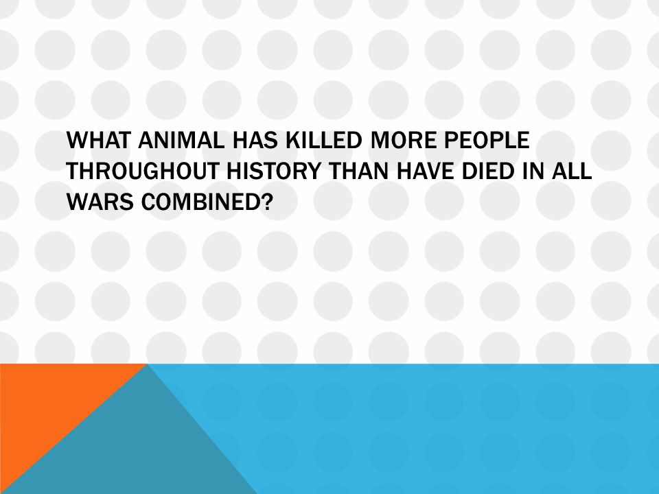 What animal has killed more people throughout history than have died in all wars combined