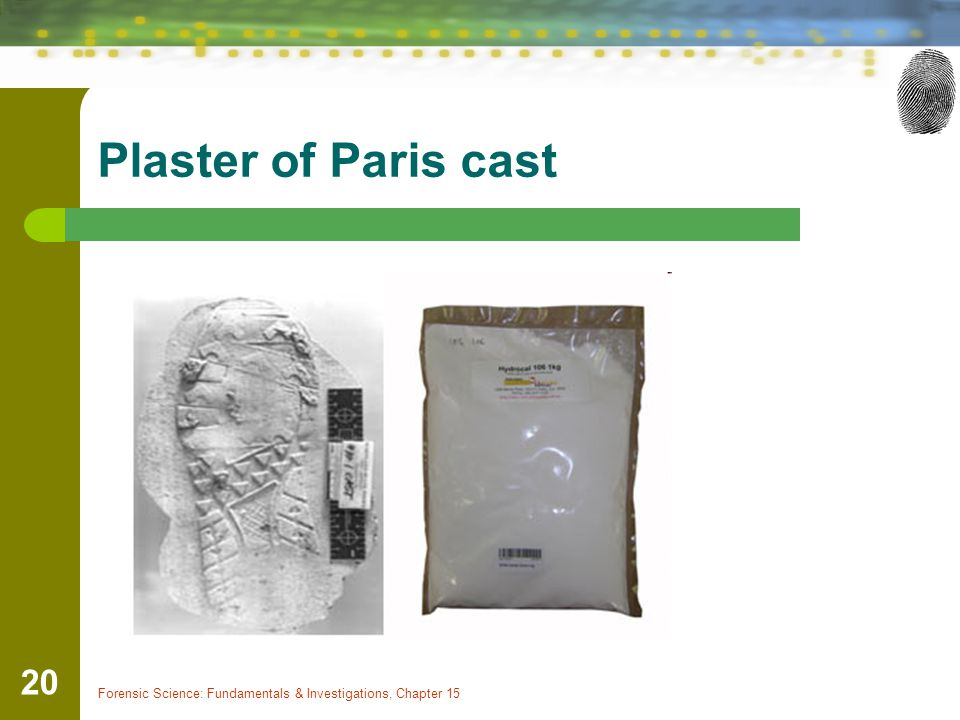 Plaster of Paris cast Forensic Science: Fundamentals & Investigations, Chapter 15