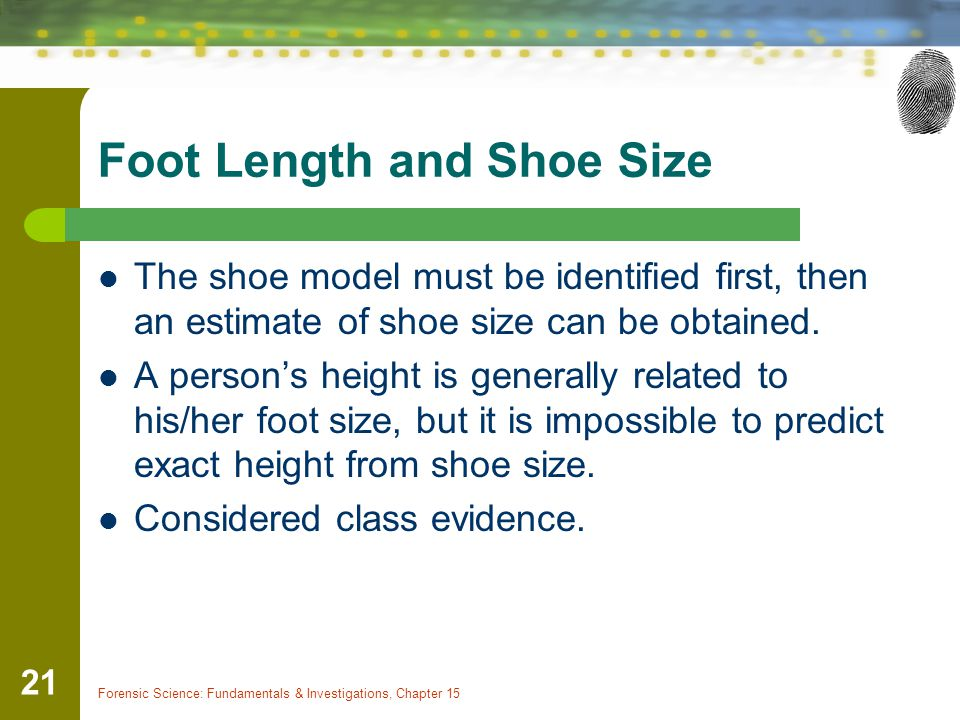Foot Length and Shoe Size