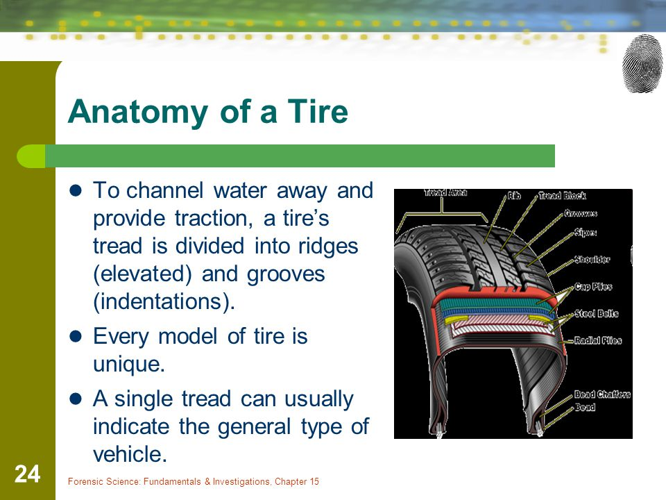 Anatomy of a Tire To channel water away and provide traction, a tire's tread is divided into ridges (elevated) and grooves (indentations).