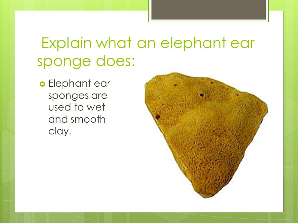 Explain what an elephant ear sponge does: