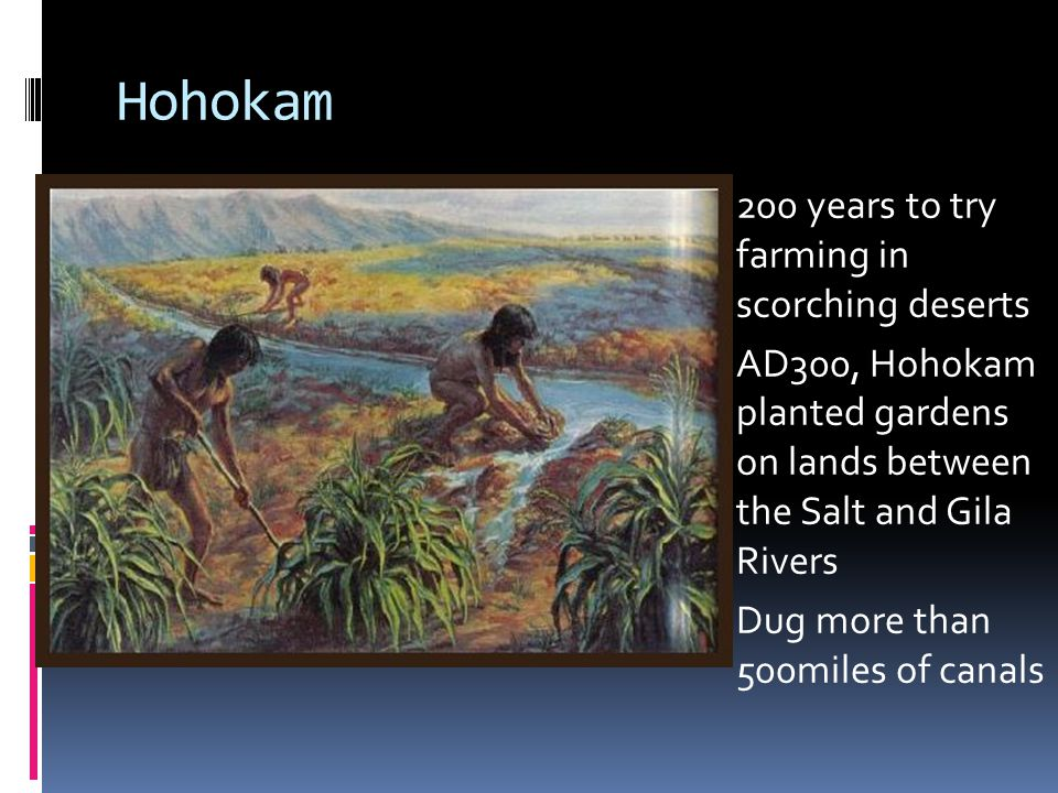 Hohokam 200 years to try farming in scorching deserts