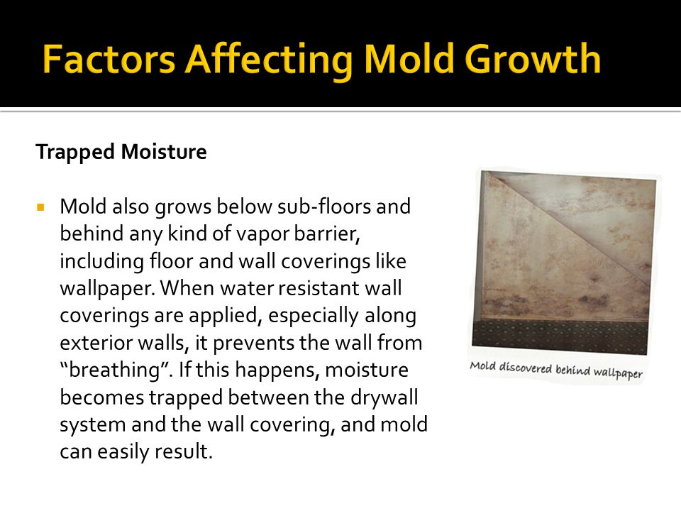 Factors Affecting Mold Growth