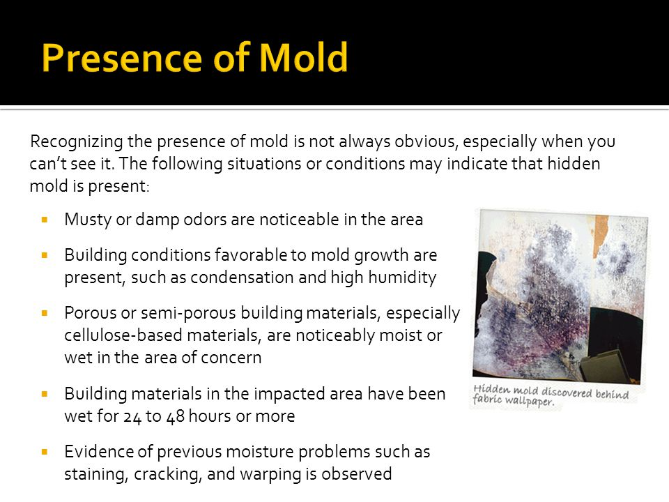 Presence of Mold