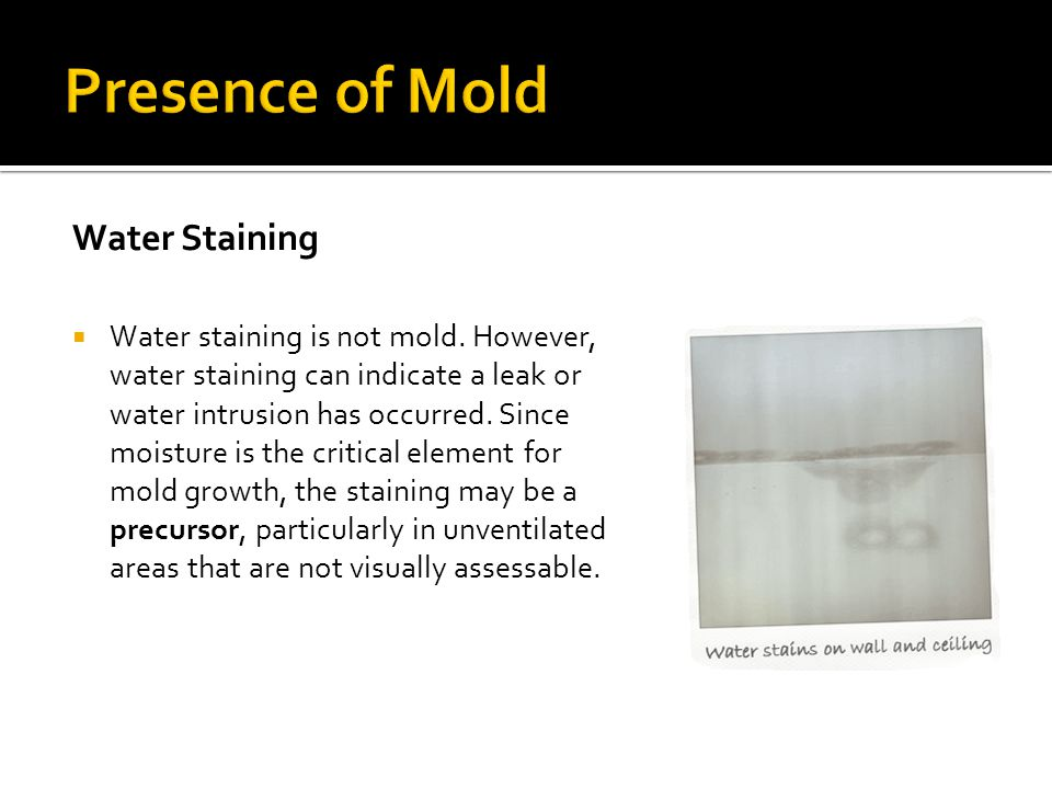 Presence of Mold Water Staining