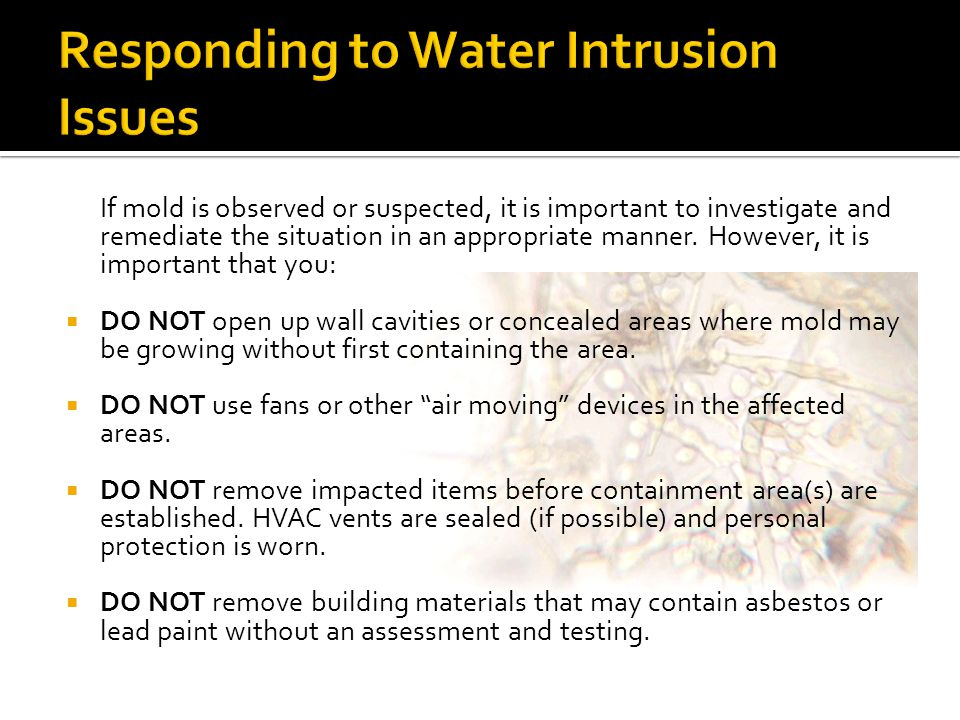 Responding to Water Intrusion Issues