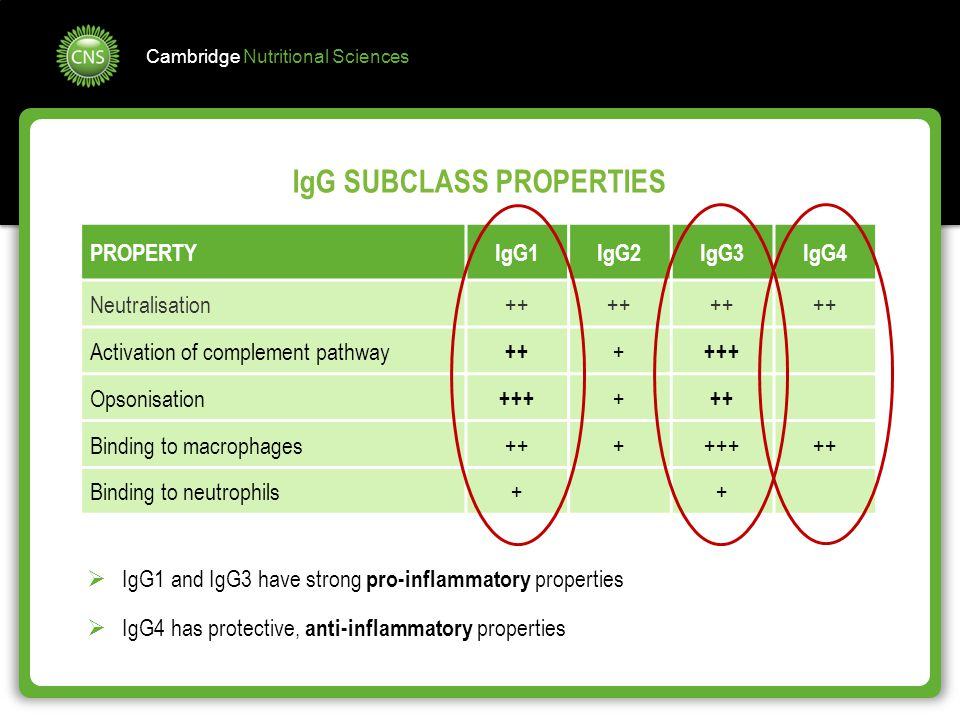 IgG SUBCLASS PROPERTIES