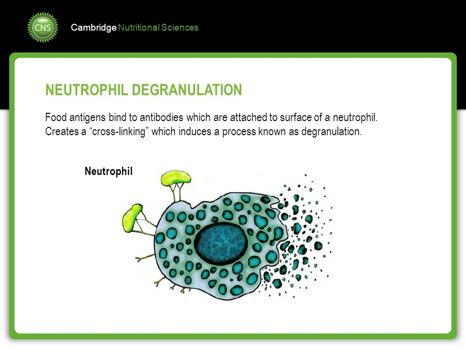 NEUTROPHIL DEGRANULATION