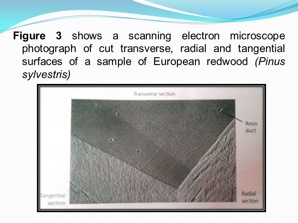 Figure 3 shows a scanning electron microscope photograph of cut transverse, radial and tangential surfaces of a sample of European redwood (Pinus sylvestris)