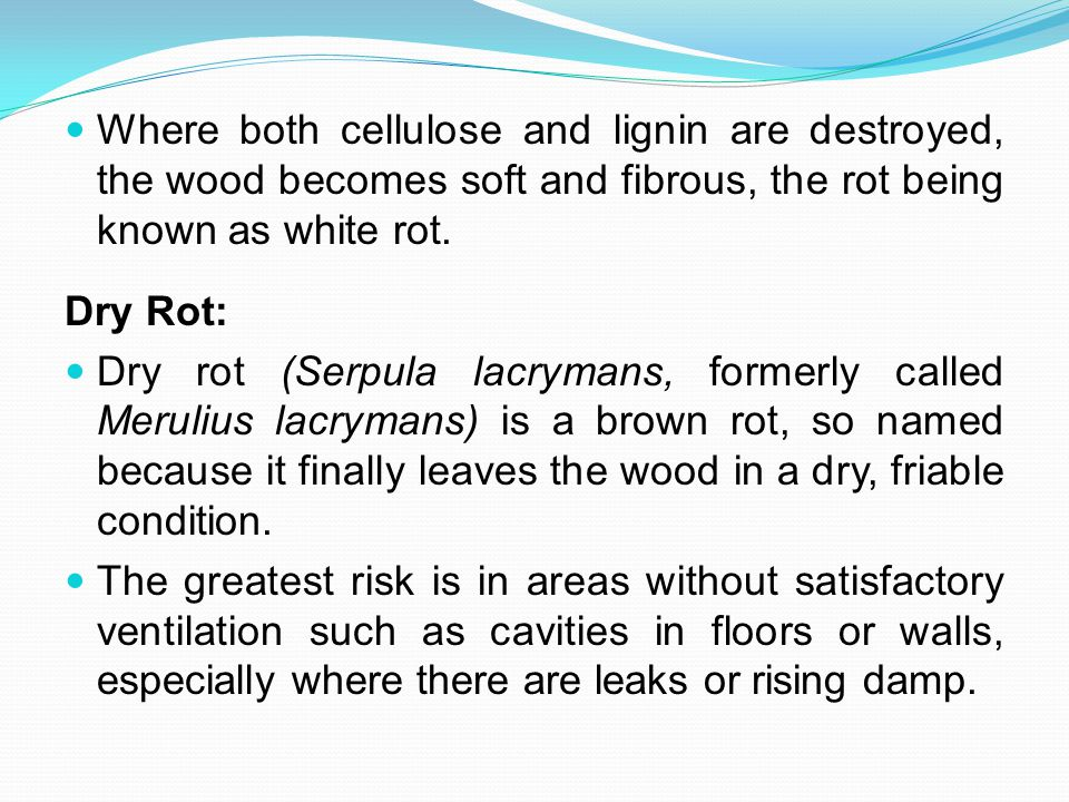 Where both cellulose and lignin are destroyed, the wood becomes soft and fibrous, the rot being known as white rot.