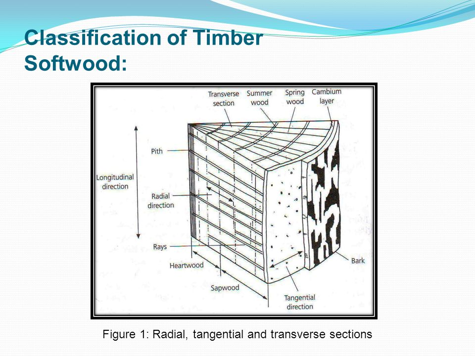 Classification of Timber Softwood:
