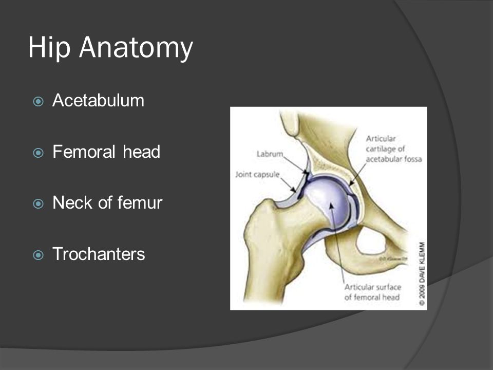 Hip Anatomy Acetabulum Femoral head Neck of femur Trochanters
