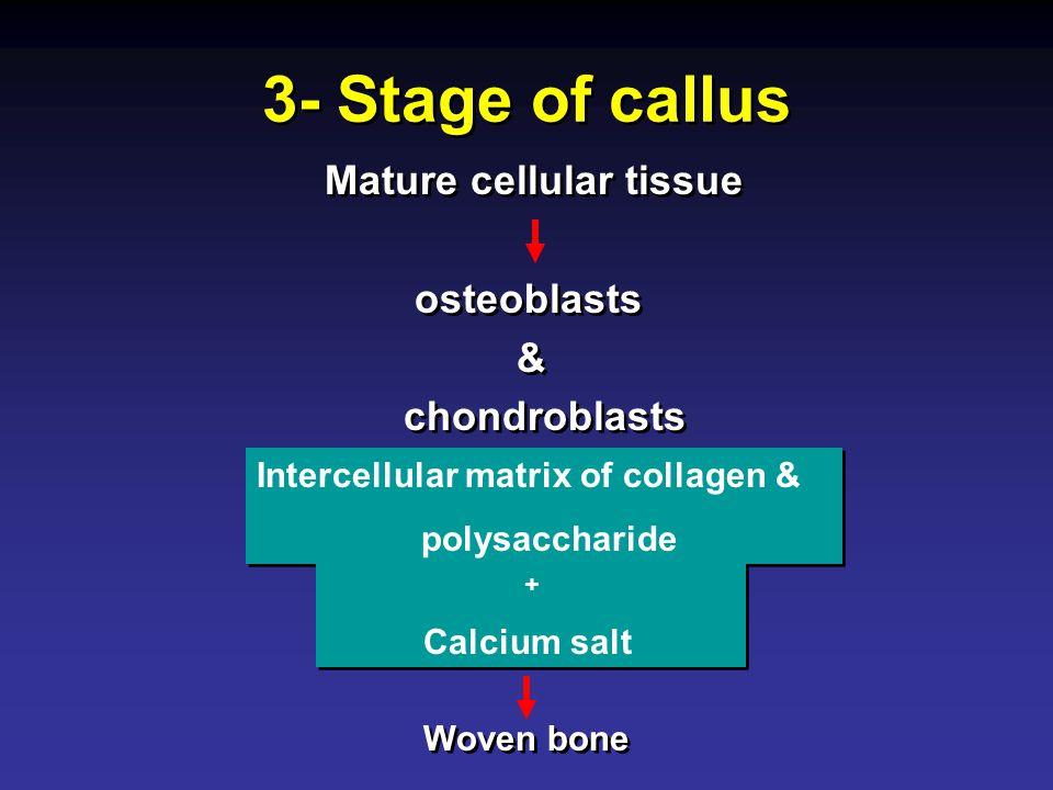 3- Stage of callus Mature cellular tissue osteoblasts & chondroblasts