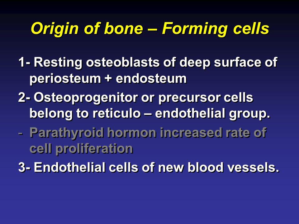 Origin of bone – Forming cells