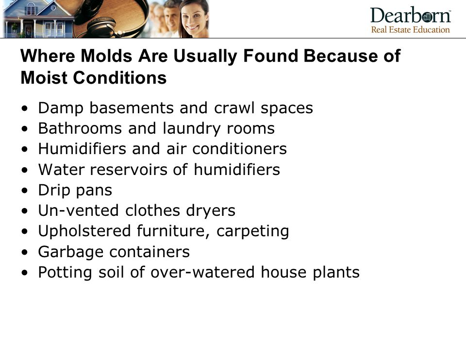 Where Molds Are Usually Found Because of Moist Conditions