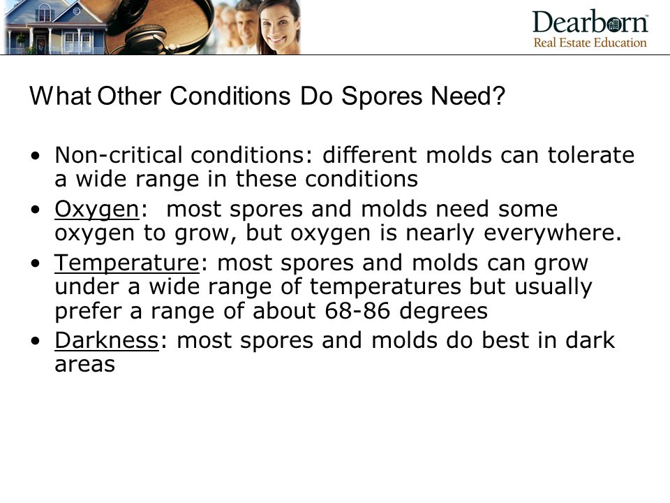 What Other Conditions Do Spores Need
