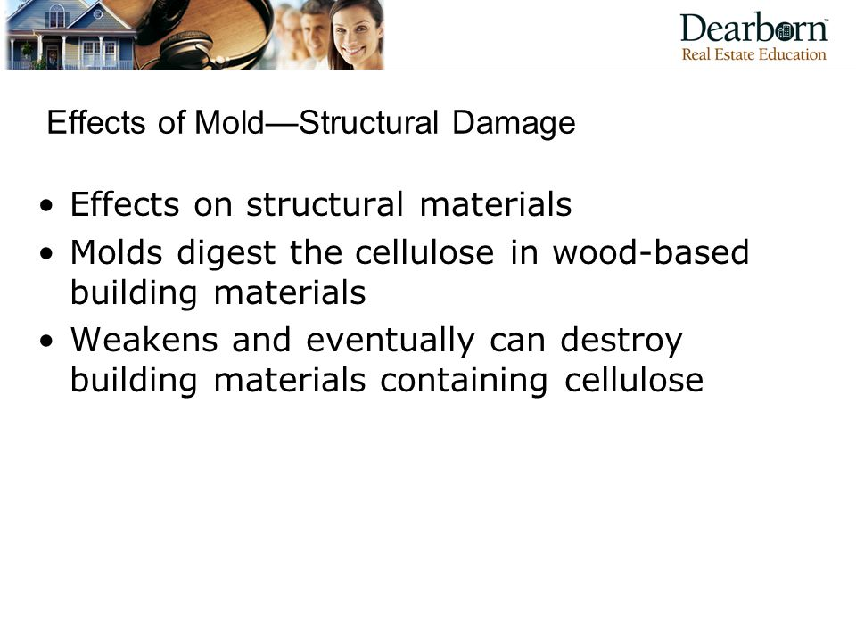 Effects of Mold—Structural Damage