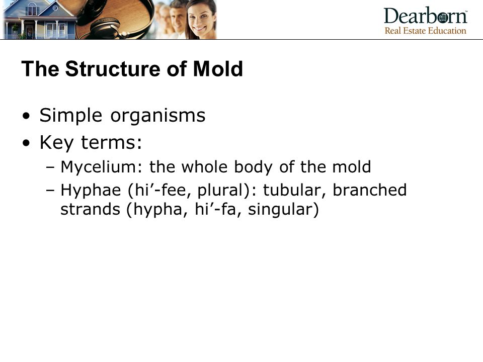The Structure of Mold Simple organisms Key terms: