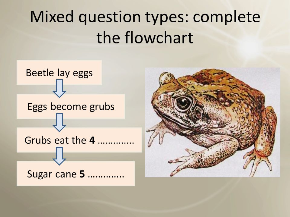 Mixed question types: complete the flowchart