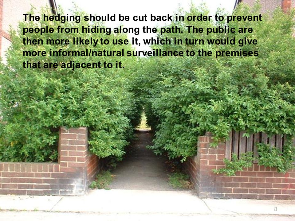 The hedging should be cut back in order to prevent people from hiding along the path. The public are then more likely to use it, which in turn would give more informal/natural surveillance to the premises that are adjacent to it.