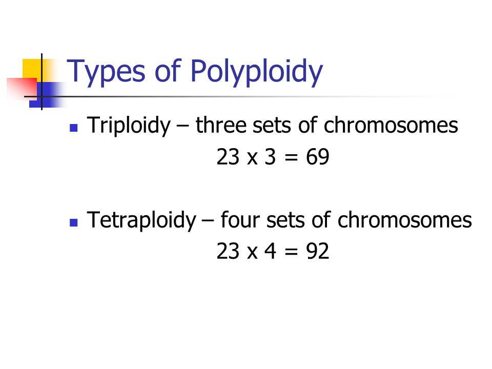 Types of Polyploidy Triploidy – three sets of chromosomes 23 x 3 = 69