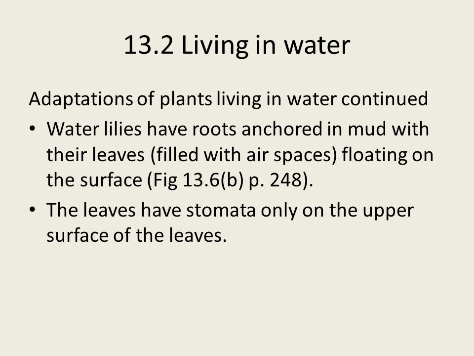 13.2 Living in water Adaptations of plants living in water continued